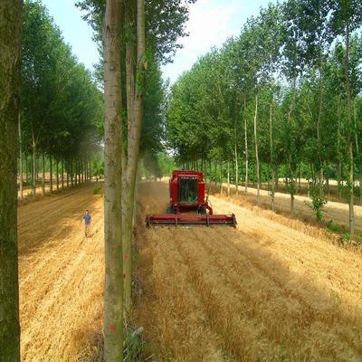 Máquinas agroflorestais